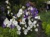 kwiaty-151