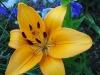 kwiaty-152