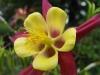 kwiaty-153