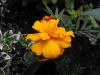 kwiaty-154