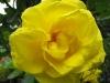 kwiaty-157