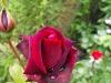 kwiaty-159