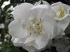 kwiaty-160