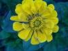 kwiaty-162