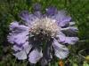 kwiaty-163