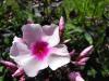 kwiaty-164