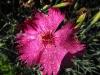 kwiaty-165