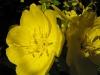 kwiaty-166