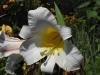 kwiaty-167