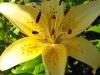kwiaty-169