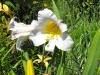 kwiaty-170